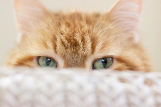 スカイプ不要のオンライン英会話:デメリット(猫)